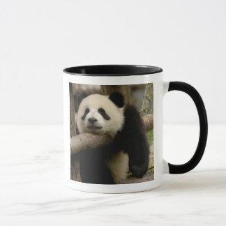 Giant panda baby Ailuropoda melanoleuca) Mug