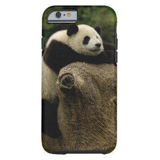 Giant panda baby (Ailuropoda melanoleuca) Tough iPhone 6 Case