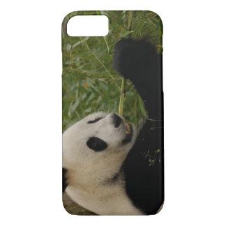Giant panda baby eating bamboo (Ailuropoda iPhone 8/7 Case