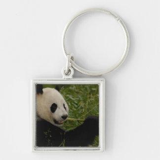 Giant panda baby eating bamboo (Ailuropoda Keychain