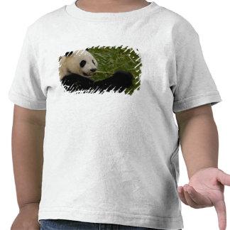 Giant panda baby eating bamboo (Ailuropoda Tshirts