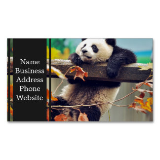 Giant panda baby over the tree business card magnet