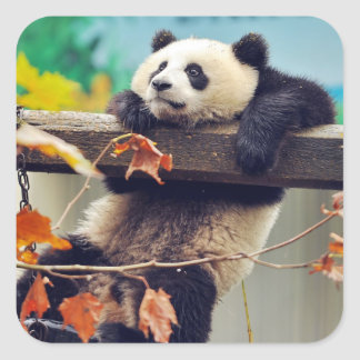 Giant panda baby over the tree square sticker