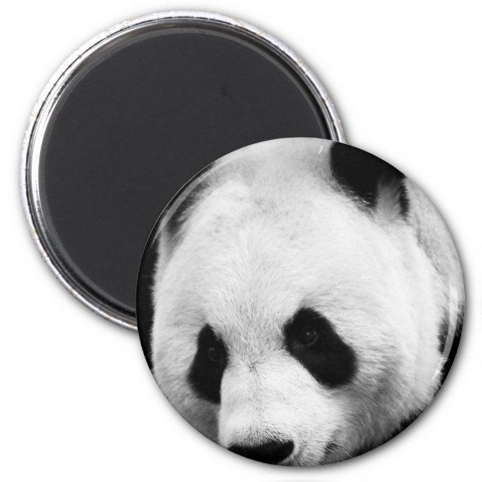Giant Panda Bear 2 Inch Round Magnet