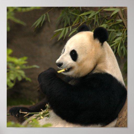panda power funds wiki