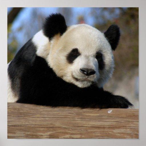Giant Panda Bear amp Baby Poster Zazzle