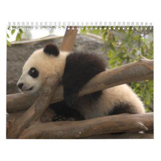 Giant Panda Bear Calendar