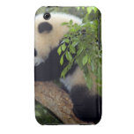 Giant Panda Bear Case-Mate Case Case-Mate iPhone 3 Cases