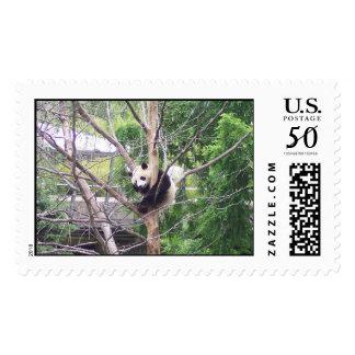 Giant panda bear cub cute cool fun postage