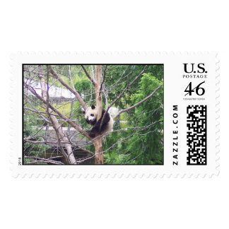 Giant panda bear cub cute cool fun postage stamps