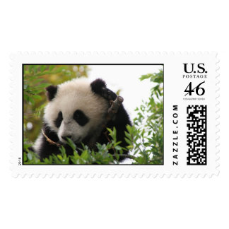 Giant panda bear cub postage stamps
