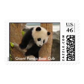 Giant Panda Bear Cub Stamp