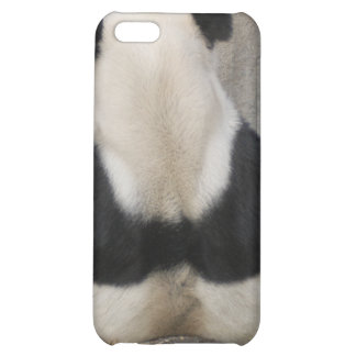 Giant Panda Bear i iPhone 5C Covers