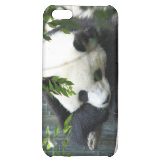 Giant Panda Bear iPhone Case Cover For iPhone 5C