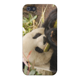Giant Panda Bear  Covers For iPhone 5
