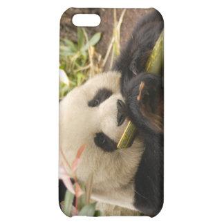 Giant Panda Bear  iPhone 5C Covers