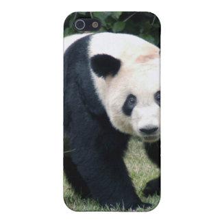 Giant Panda Bear  iPhone 5 Covers