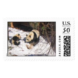 Giant panda bear mother and cub cute cool fun postage