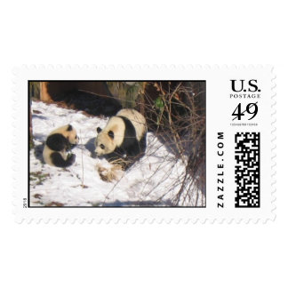 Giant panda bear mother and cub cute cool fun postage stamp
