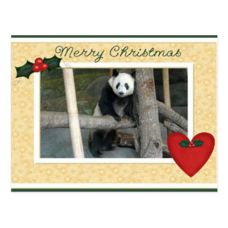 Giant Panda Bear or Baby Panda Christmas Postcard
