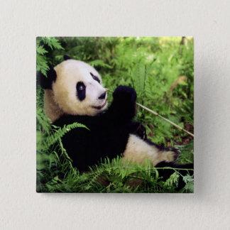 Giant Panda Bear Pinback Button