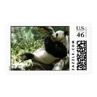 Giant Panda Bear Postage Stamp