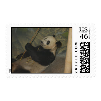 Giant Panda Bear Postage