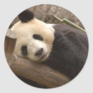 Giant Panda Bear Stickers