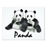 Giant Panda Bears Personalized Announcements