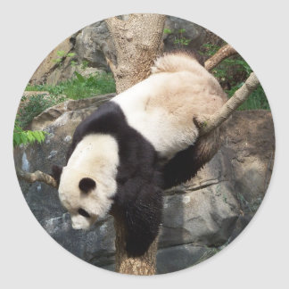 Giant Panda Climbing Down Tree Classic Round Sticker