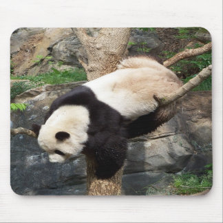Giant Panda Climbing Down Tree Mousepad
