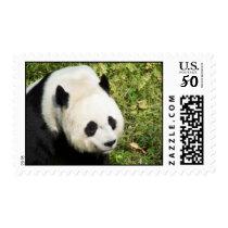 Giant Panda Close Up Portrait Postage