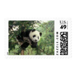 Giant Panda cub climbs a tree, Wolong Valley, Postage Stamp