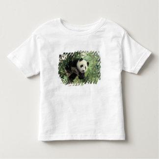 Giant Panda cub climbs a tree, Wolong Valley, Shirts