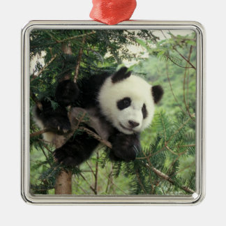 Giant Panda cub climbs a tree, Wolong Valley, Square Metal Christmas Ornament