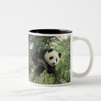 Giant Panda cub climbs a tree, Wolong Valley, Two-Tone Coffee Mug
