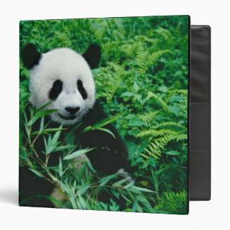 Giant Panda cub eats bamboo in the bush, Binder