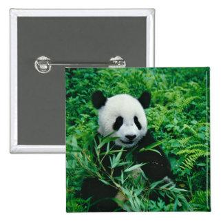 Giant Panda cub eats bamboo in the bush, Pinback Button