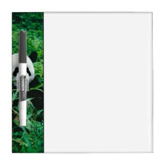 Giant Panda cub eats bamboo in the bush, Dry Erase Board