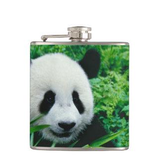 Giant Panda cub eats bamboo in the bush, Flask