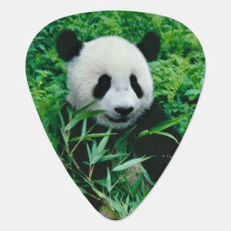 Giant Panda cub eats bamboo in the bush, Guitar Pick
