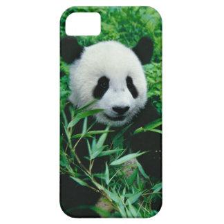 Giant Panda cub eats bamboo in the bush, iPhone SE/5/5s Case