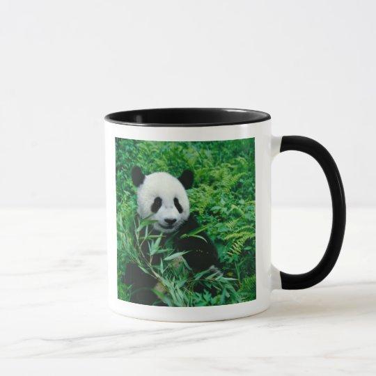Giant Panda cub eats bamboo in the bush, Mug