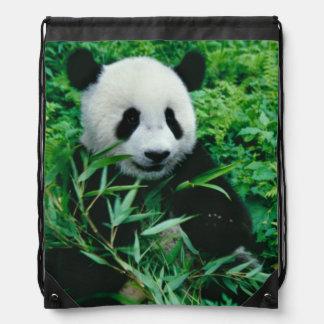 Giant Panda cub eats bamboo in the bush, Backpacks