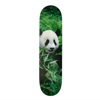 Giant Panda cub eats bamboo in the bush, Skate Board