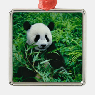 Giant Panda cub eats bamboo in the bush, Square Metal Christmas Ornament