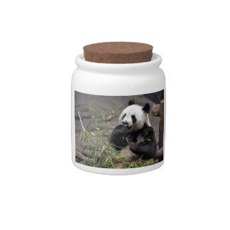Giant panda eating bamboo candy dish