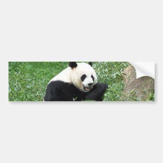 Giant Panda Eating Bamboo Car Bumper Sticker