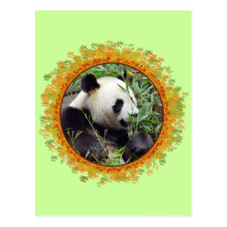 Giant panda eating bamboo in frame post cards