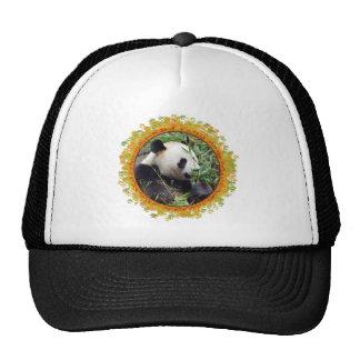 Giant panda eating bamboo in frame trucker hat